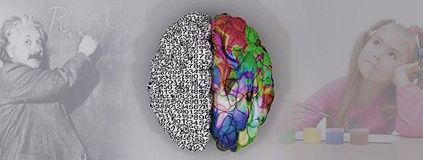 Los hemisferios cerebrales y su importancia